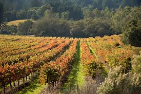 jack london vineyards